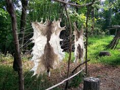 Animal Skins For Clothing