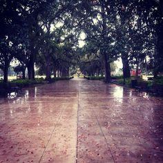 Take me away from this cold and wet weather! We're looking forward to warmer temperatures and sunny skies for the rest of the week. http://instagram.com/p/lr6nXQIlLx/ #TMA #rain #Savannah