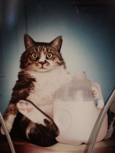 My milk cat brings all the boys to the yard..