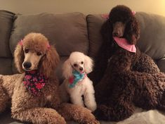 Ella, Gracie and Lucy