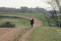 Condition Your Horse for Endurance Riding