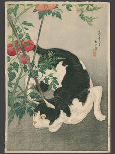 Art, Ukiyoe, Woodblock Print, Japan, Animal, Cat. Shotei Takahashi Title:Black Cat And Tomato Plant Date:1931
