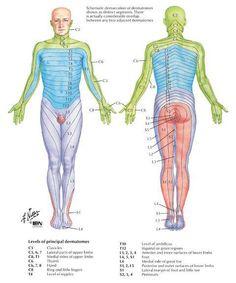 Anatomie & Physiotherapie