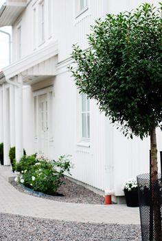 klotkörsbär - Sök på Google Garden Landscaping, Balcony, Terrace, Sidewalk, New Homes, Home And Garden, Yard, Landscape, Outdoor Decor