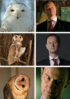 Owls that look like Mark Gatiss.