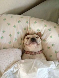 GET OUT OF BED AND WORK FOR ONCE IN YOUR LIFE. | 19 Dogs Who Need To Get A Job