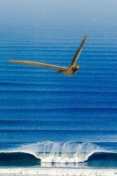 """""""Hoje,através de sua imaginação,homem e gaivota voam sobre os mesmos mares,navegam nos mesmos barcos,ouvem as mesmas histórias,sentem a mesma saudade...E por medo,dúvidas,castigo dos deuses,ou até mesmo por bruxaria,não conseguem mais estar juntos...""""(F.A.T)"""
