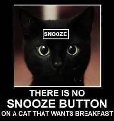 There is no snooze button on a cat that wants breakfast