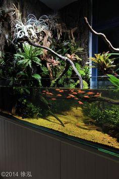 10 Tips on Designing a Freshwater Nature Aquarium Terrariums, Fish Tank Terrarium, Aquarium Terrarium, Planted Aquarium, Tropical Fish Aquarium, Tropical Fish Tanks, Nature Aquarium, Aquarium Fish Tank, Aquascaping
