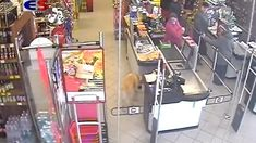 Dog stealing a chocolate bar Labrador, Cute Animals, Puppies, Pets, Bar, Chocolate, Pretty Animals, Cubs, Cutest Animals