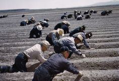 salinas farm workers - Google Search