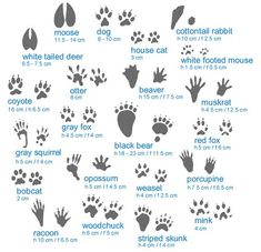 animal footprints - Google Search