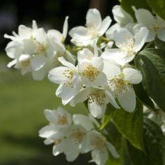 seringat Plantation, Summer Breeze, Planters, Container, Nature, Flowers, Tour, Bouquets, Gardening