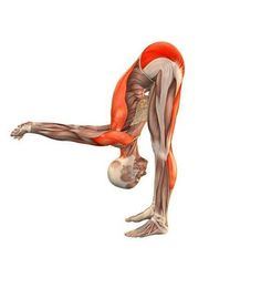 Can yoga increase flexibility? When you started your yoga practice, you likely had weight loss or tension release in mind. Yoga Fitness, Fitness Workouts, Iyengar Yoga, Ashtanga Yoga, Yoga Series, Kundalini Yoga, Yoga Position, Yoga Muscles, Free Yoga Videos
