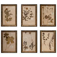 Planche Botanique Cutting board Herbs Wall Art Dry Flower Decor Butterflies Decorative Board Herb Board Kitchen Serving Board Herbarium Art
