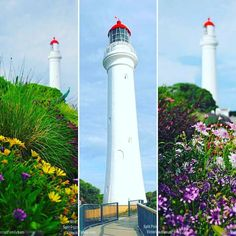 #Lighthouse #visitvictoria #visitgreatoceanroad #victoria #australia #great #Ocean #road #GreatOceanRoad #splitpointlighthouse #flowers #wildflowers #Travel by aussie_nomad_family