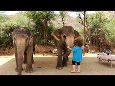 Elisabeth und die Elefanten - YouTube Youtube Kanal, Elephant, World, Animals, Elephants, Ghosts, Animales, Animaux, Animal