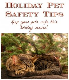 Keep your #pets safe during the #holidays with these pet #safety tips!