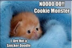 Don't eat me, I'm not a snickerdoodle!!!!!