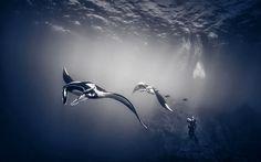 Las 10 mejores fotografías tomadas bajo el agua   Noti.in - Lo más interesante de la Red