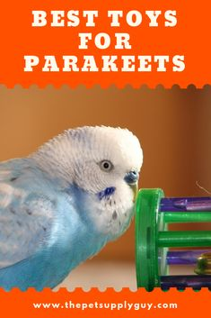 Toys for Parakeets / Budgies Toys for Parakeets / Budgies - -You can find Parakeets and more on our website.Toys for Parakeets / Budgies Toys for Parakeets / Budgies - - Parakeet Food, Parakeet Care, Budgie Parakeet, Budgies, Parrots, Budgie Cages, Cockatiel, Parakeet Colors, Diy Bird Cage