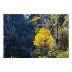 Fall Colors 7 Poster from Florals by Fred #zazzle #gift #photogift