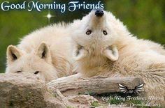 Good Morning Friends!