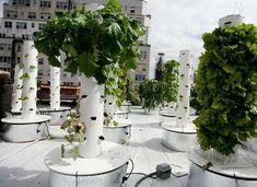 Cultivo hidroponico moderno y diseños de jardines verticales -