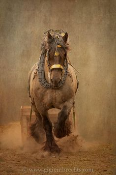 My Great great Grandfather loved training horses, and He Loved his Draft horses. Big Horses, Work Horses, Horse Love, All The Pretty Horses, Beautiful Horses, Animals Beautiful, Horse Photos, Horse Pictures, Zebras