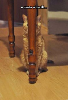 Picture # 52 collection funny cats picture pics) for December 2015 – Funny Pictures, Quotes, Pics, Photos, Images and Very Cute animals. Crazy Cat Lady, Crazy Cats, I Love Cats, Cute Cats, Funny Cats, Funny Animals, Cute Animals, Ninja Cats, Photo Chat