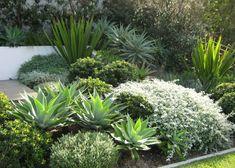 🌟Tante S!fr@ loves this📌🌟 🌟Tante S!fr@ loves this📌🌟. Growing Gardens, Farm Gardens, Outdoor Gardens, Dry Garden, Garden Beds, Australian Native Garden, Coastal Gardens, Garden Landscape Design, Garden Borders