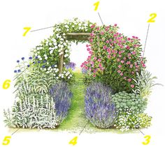 "1. Rosa ""Zepbirine Droubin"" 2. Sedum spectabile""Brillant"" 3. Diantbus pjumarius 4. Lavandula angustifolia 5. Stacbys byzantina 6. Ecbinops bannatius 7. Rosa ""Bobby james"""