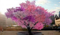 Cet arbre «magique» produit 40 variétés différentes de fruits