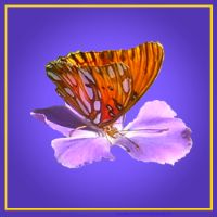Butterfly on a purple flower. This design could be used for coasters, custom jewelry boxes, tiles.