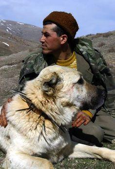 Turkish Kangal Sheppard Dog -National Dog of Turkey. Bred to guard livestock. Caucasian Shepherd Dog, Anatolian Shepherd, Big Dogs, Dogs And Puppies, Best Friends Pets, Kangal Dog, Dog Yard, Farm Dogs, Large Dog Breeds
