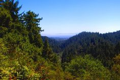 Henry Cowell Redwoods State Park.  69 & 70 shaded and lots of space, 99 doesn't border road, 76 had views.  Roaring railroads steam train to Bear mountain.  Redwood grove hike <1 mile.