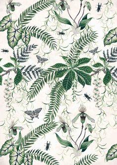 Sumatran jungle botanical print by Charlotte Day: