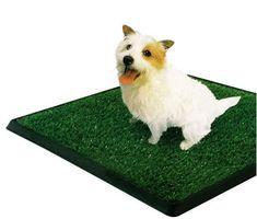 PetZoom Pet Park Indoor Pet Potty x x Dogs Cats Poop Scoop Toilet Dog Litter Box, Pet Dogs, Dog Cat, Puppy House, Dog Potty, Dog Training Pads, Potty Training, Indoor Pets, Dog Accessories