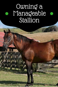 Stop your stallion from being a problem child with these helpful tips.