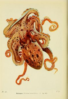 The seas; our knowledge of life in the sea and how it is gained. 1928   Internet Archive