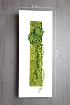 Make with white foam core board faux succulents & reindeer moss (use box for ba Moss Garden, Garden Art, Garden Design, Moss Wall Art, Moss Art, Plant Art, Plant Decor, Vertical Garden Wall, Decoration Plante