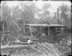 A floating sawmill in a Louisiana swamp. Photo by George François Mugnier, taken sometime between 1880 and 1920. Image courtesy of the Collections of the Louisiana State Museum.