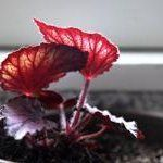 5 Overlooked Plants That Can Survive The Dark (Almost) | Apartment Therapy