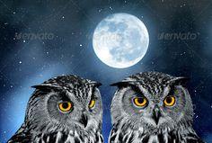 Bubo bubo Eurasian, animal, animals, background, beast, bird, breeding, bubo, close, closeup, danger, dangerous, darkness, eagle, environment, eye, eyes, face, fearful, fearless, fears, feather, flying, halloween, head, horror, look, moon, moonlight, moonlit, natural, nature, night, nightmare, owl, pecker, pest, pet, portrait, predator, raptor, sky, up, wild, wilderness, wildlife, zoo, Bubo bubo