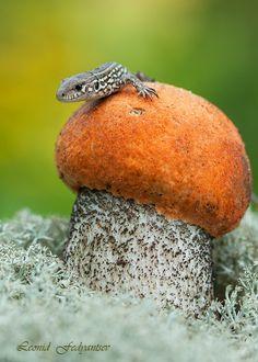Mushroom and Lizard by Leonid Fedyantsev
