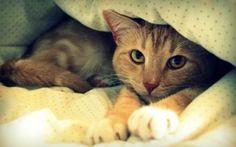 Wallpaper cat, red, bed, blanket, resting