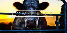 Cowspiracy: The Sustainability Secret, produced by Leonardo DiCaprio, joins our ranking of the 50 Best Documentaries on Netflix. Best Documentaries On Netflix, Vegan Documentaries, Breaking Bad, Best Science Movies, Movies Showing, Movies And Tv Shows, Secret Live, Environmental Education, Reality Check