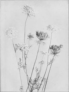 This is a tattoo idea I look very forward to getting. Queen Anne's Lace reminds me of happy, Summer days.