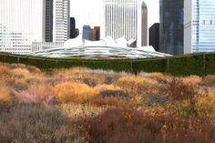 piet oudolf + ggn :: millennium park, chicago