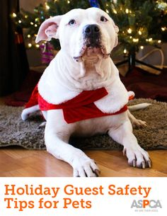 t's the time of year when you'll be opening your home to your closest family and friends, and if you're anything like us, you'll want to enjoy your holiday celebrations with everyone you love—including your four-legged companions.  But did you know that holiday guests can bring along a variety of potential hazards and dangers for your furry friends?